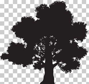 Oak Silhouette Tree PNG