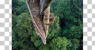 Wildlife Photographer Of The Year Wildlife Photography Orangutan PNG