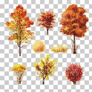 Shrub Autumn Leaf Color Tree PNG