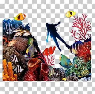 Coral Reef Fish Seabed PNG