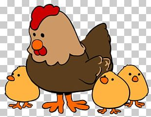 Chicken Cartoon Drawing PNG