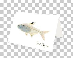 Pristella Maxillaris Tetra Fish X-ray Art PNG