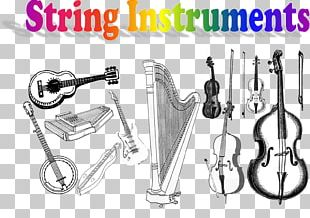 String Instruments Musical Instruments Family PNG