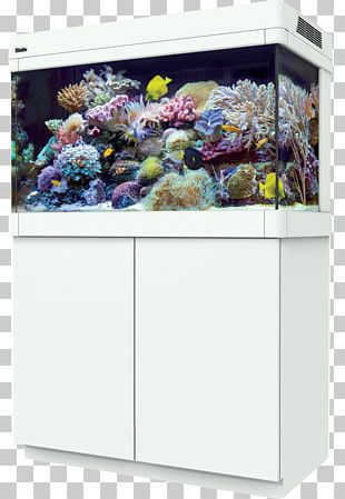 Reef Aquarium Coral Reef Red Sea Max C-250 Red Sea Reefer 250 PNG
