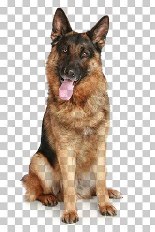 German Shepherd Puppy Pet PNG
