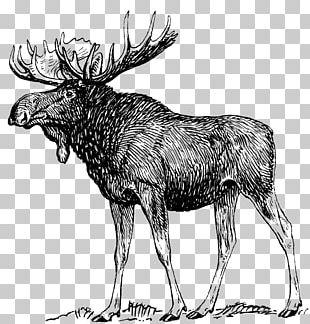 Moose Deer Drawing Art Sketch PNG
