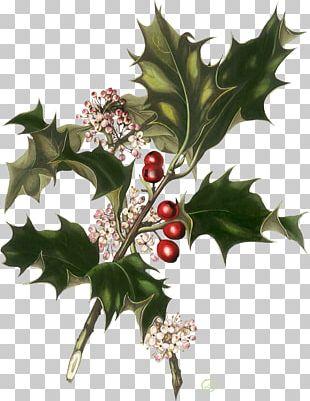 Santa Claus Christmas Card Wedding Invitation Greeting & Note Cards PNG