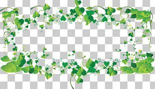 Frames Leaf PNG