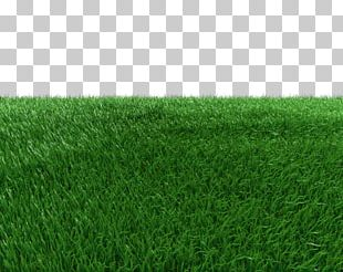 Artificial Turf Green Meadow Grasses PNG