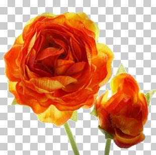 Garden Roses Orange Blossom Flower Red PNG