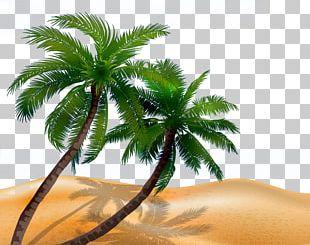 Arecaceae Tree Silhouette Illustration PNG