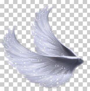 Wings PNG