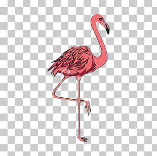 Flamingos Bird Computer Icons PNG