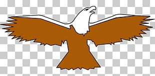 Bald Eagle Bird Wing PNG