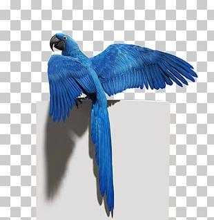 Budgerigar Bird Parrot Macaw Feather PNG
