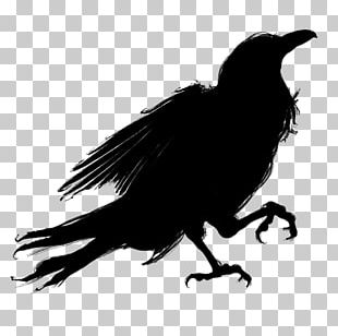 Silhouette Bird American Crow PNG