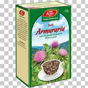Tea Fares Field Horsetail Food Medicinal Plants PNG