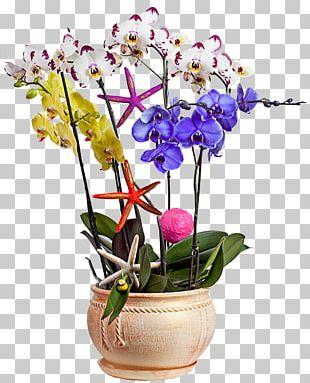 Moth Orchids Cut Flowers Floral Design Garden Roses PNG