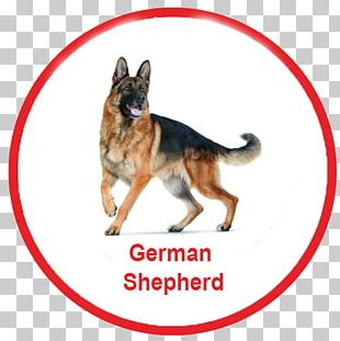 German Shepherd Dachshund Dog Toys Ball Fetch PNG