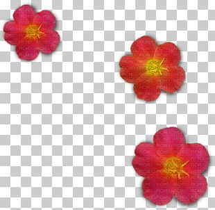 Mallows Magenta Family PNG
