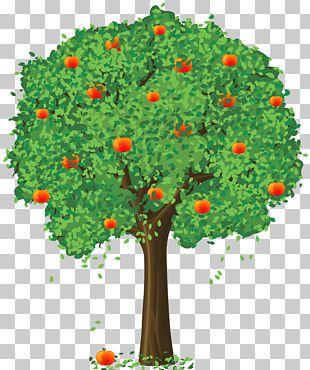 Fruit Loose And Fancy Tree Tangerine Lemon PNG