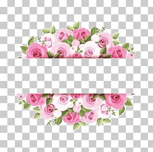 Rose Pink Flower Stock Photography PNG