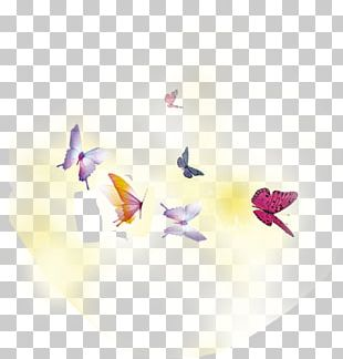Butterfly Spring PNG