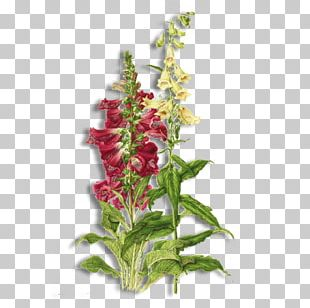 Botany Botanical Illustration Flower Digitalis Purpurea PNG