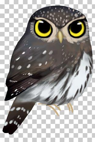 Owl Beak Feather Animal PNG