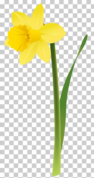 Daffodil Floral Design Cut Flowers Yellow PNG