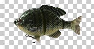 Bluegill Fishing Baits & Lures Swimbait PNG