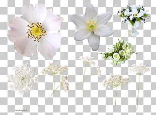 Cut Flowers Floral Design PNG