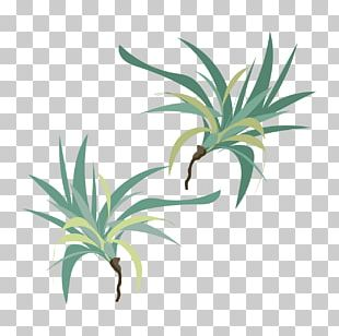 Leaf Grasses Plant Stem Evergreen INAV DBX MSCI AC WORLD SF PNG
