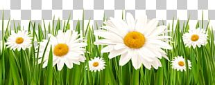 White Clover Flower Grasses Lawn PNG