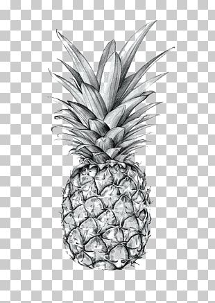 Pineapple Drawing Art Printmaking Sketch PNG