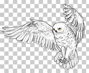 Snowy Owl Beak Feather Bird PNG