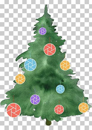 Christmas Tree Photography Watercolor Painting PNG