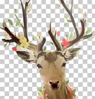 Reindeer Watercolor Painting Sika Deer PNG