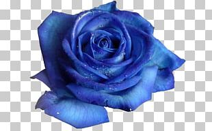Blue Rose Flower Desktop PNG