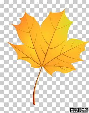 Maple Leaf Paper Boxelder Maple Autumn PNG