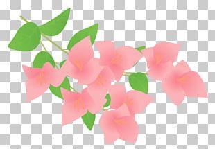 Bougainvillea Petal Plant Flower PNG