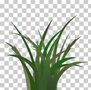 Lawn Cartoon PNG