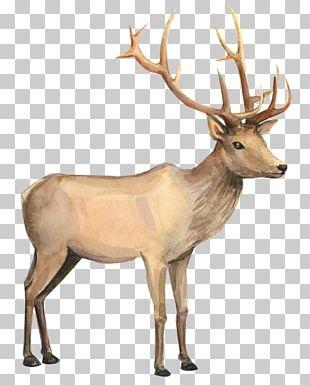 Reindeer Watercolor Painting Drawing PNG