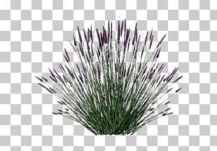 Lavender Shrub Plant .dwg PNG