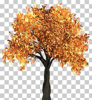 Tree Autumn Leaf Color PNG
