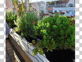 Garden Tree Flowerpot Green Wall Houseplant PNG