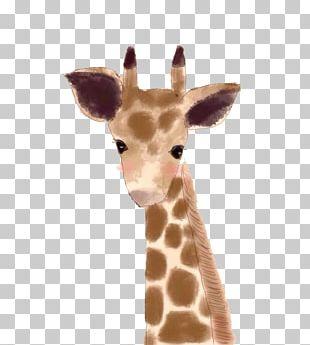 Ximending Northern Giraffe Taobao Illustration PNG