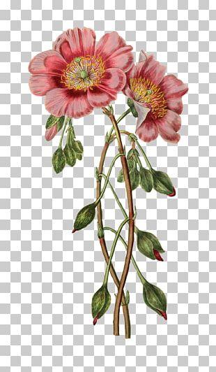 Botanical Illustration Flower Craft PNG