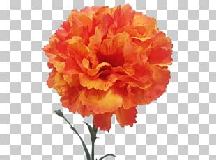 Carnation Floristry Cut Flowers Rose Family Peony PNG