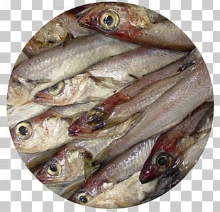 Kipper Blue Whiting Fish Products Oily Fish PNG